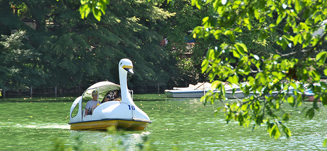 井の頭公園のスワンボート