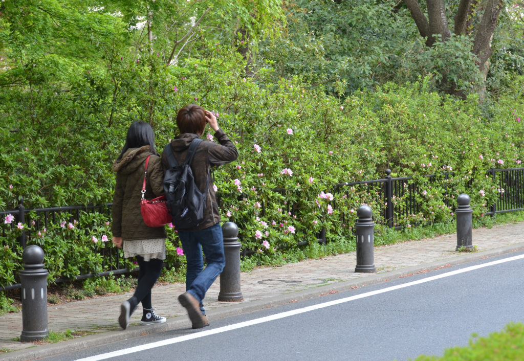 三鷹の風の散歩道