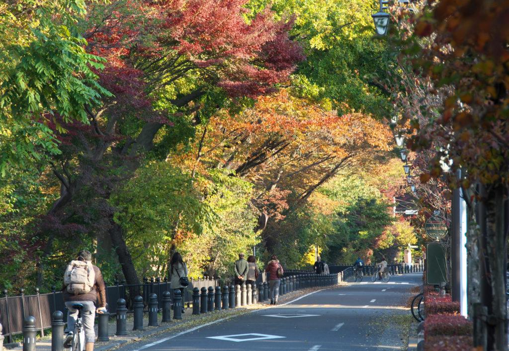 三鷹の風の散歩道 秋