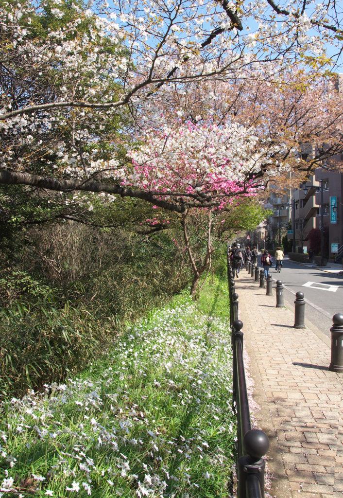 初春の風の散歩道