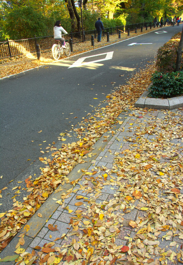 三鷹 風の散歩道 秋