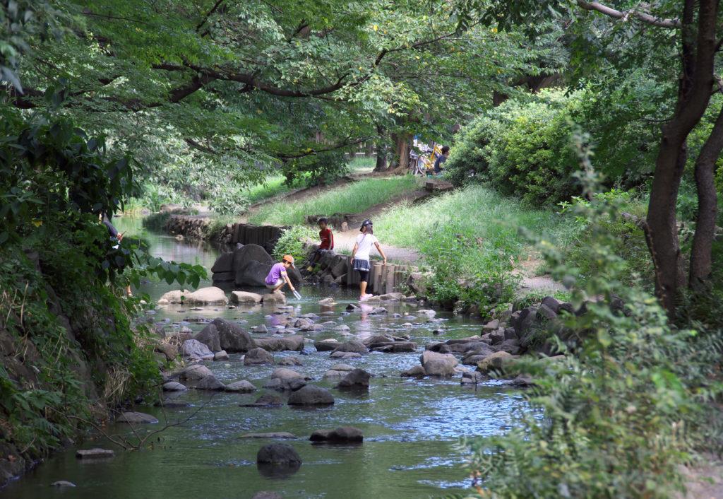 吉祥寺 井の頭公園の中の神田川 親水公園