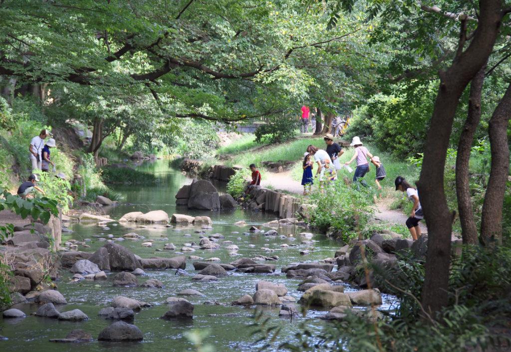 吉祥寺 井の頭公園の中の神田川 石づたいに川を渡ることができます