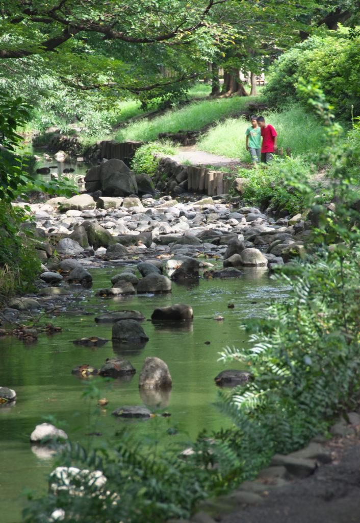 吉祥寺 井の頭公園の中の神田川