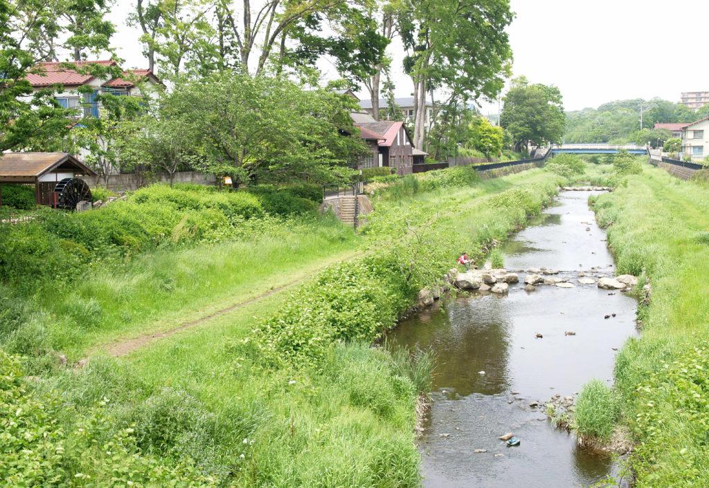 野川の風景と遊歩道の下の河川敷を歩ける道