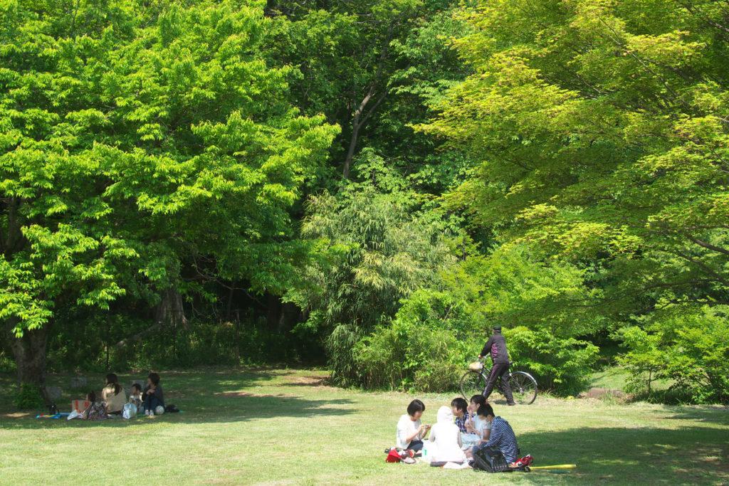 三鷹 野川の風景