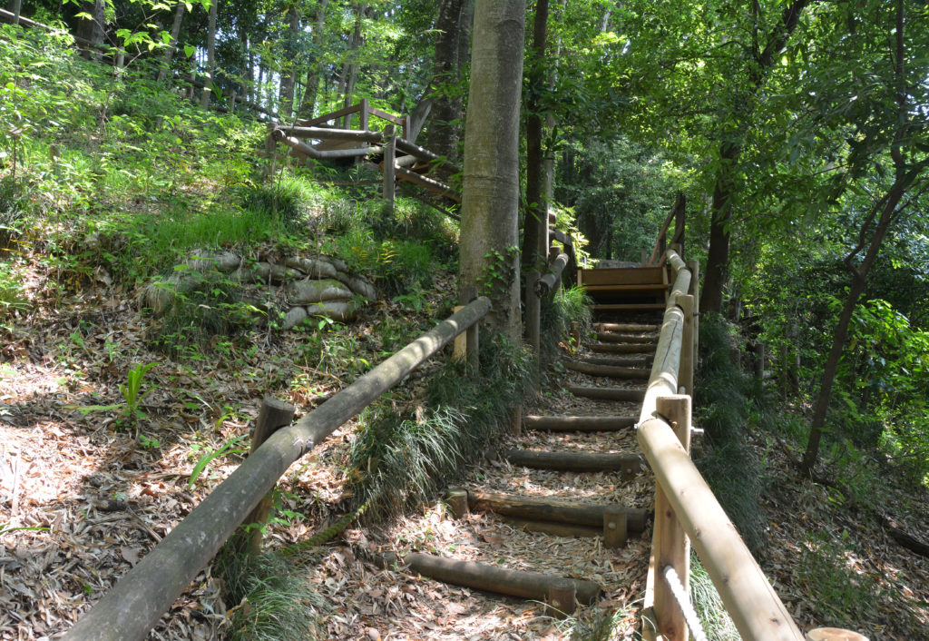 三鷹 出山横穴墓 入口に通じる道は国分寺崖線上に位置する