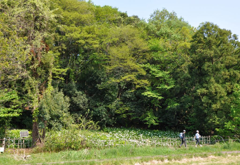 三鷹の大沢の里 国分寺崖線の下を散策する人、大沢の崖(はけ)があります