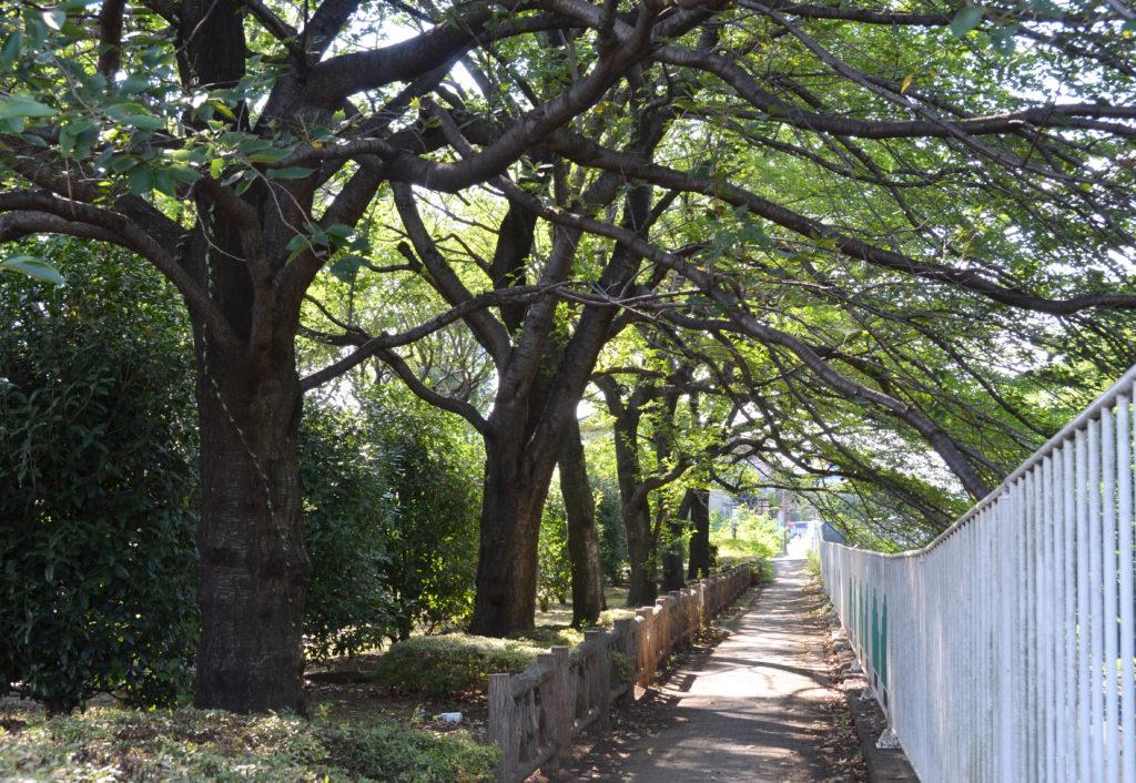 三鷹 仙川公園 遊歩道