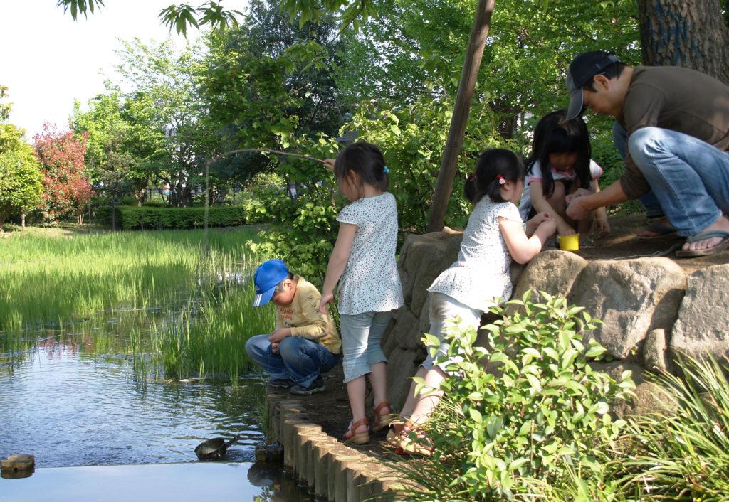三鷹の丸池公園の様子