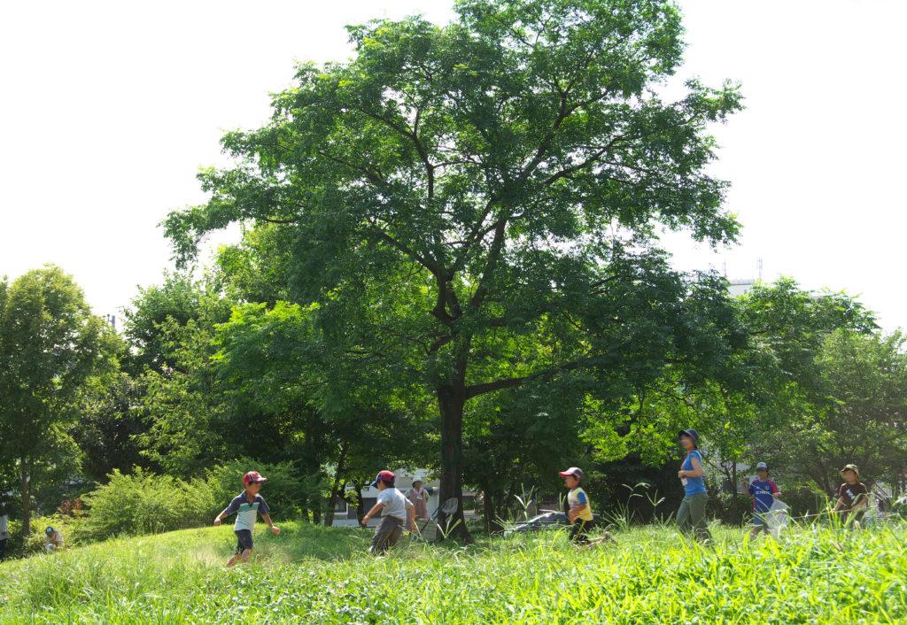 三鷹 みはらし山公園 丸池公園の西にある原っぱ