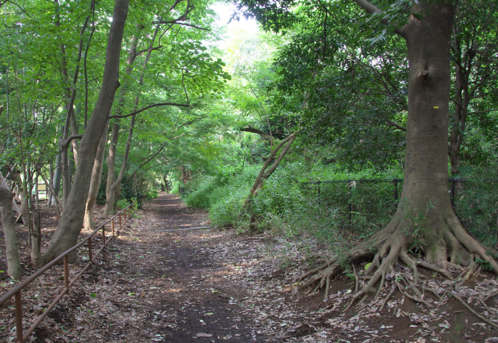 吉祥寺 井の頭公園 西園 小鳥の森横の散策路