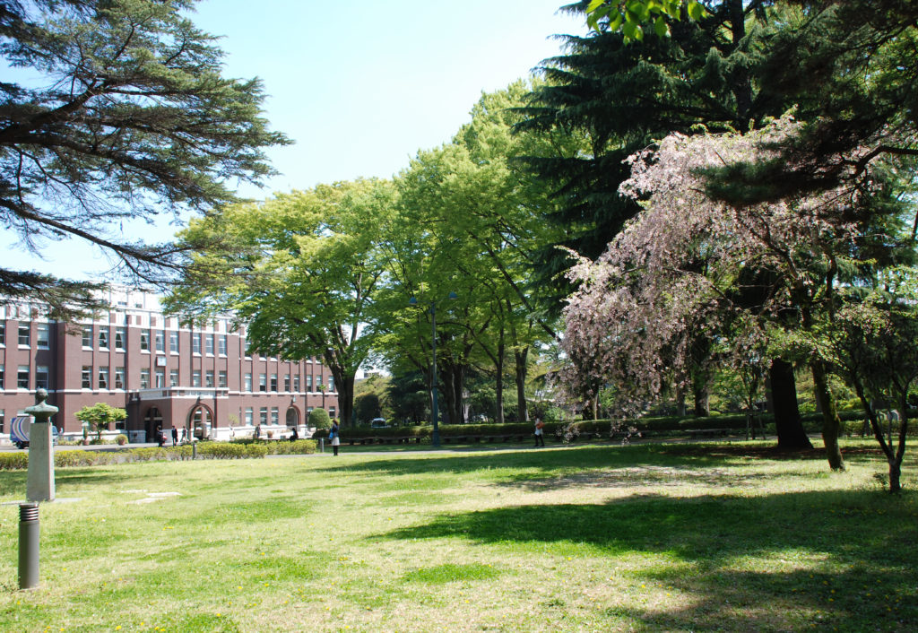 武蔵野市 成蹊学園ケヤキ並木