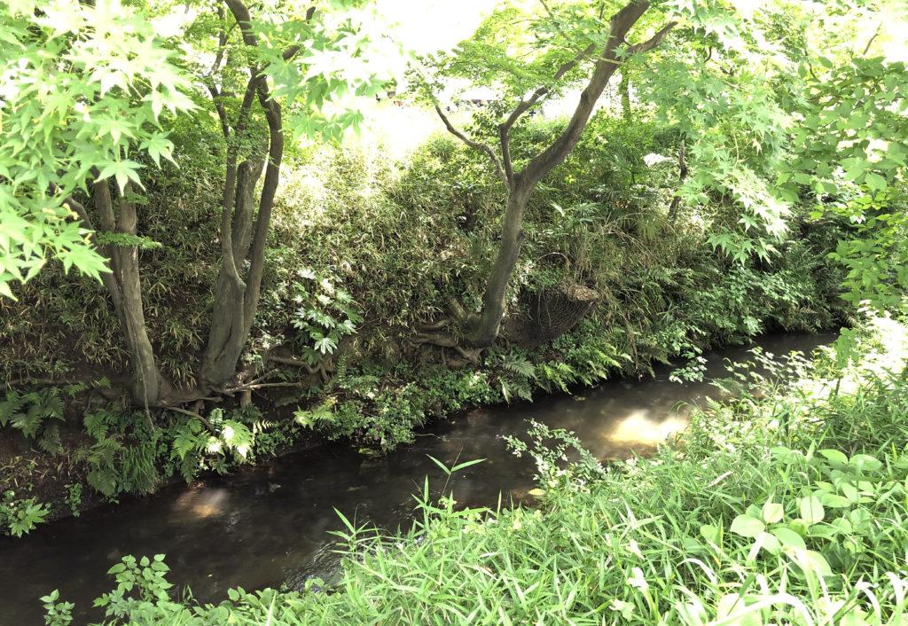 三鷹 玉川上水