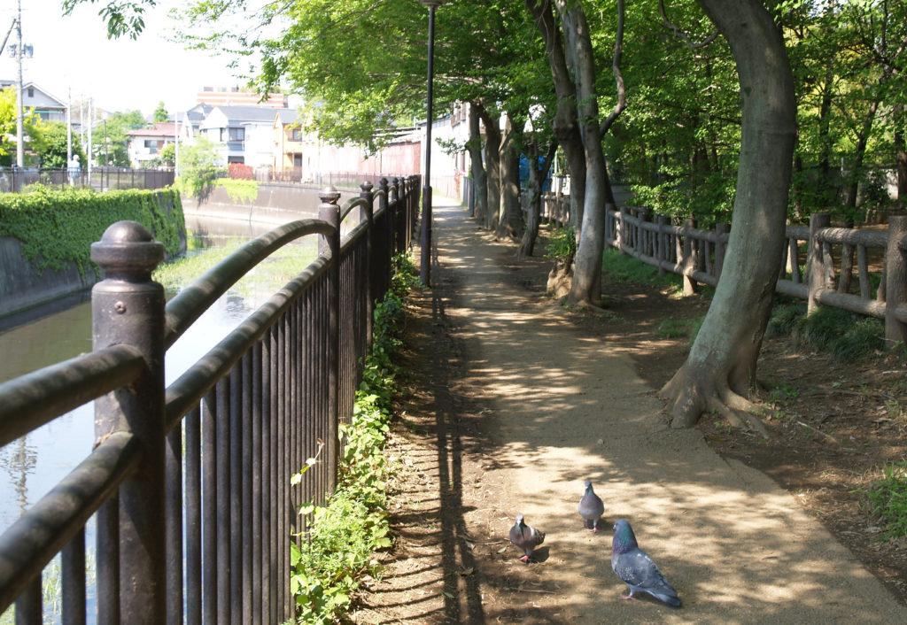 三鷹 天神山青少年広場 仙川沿いの遊歩道