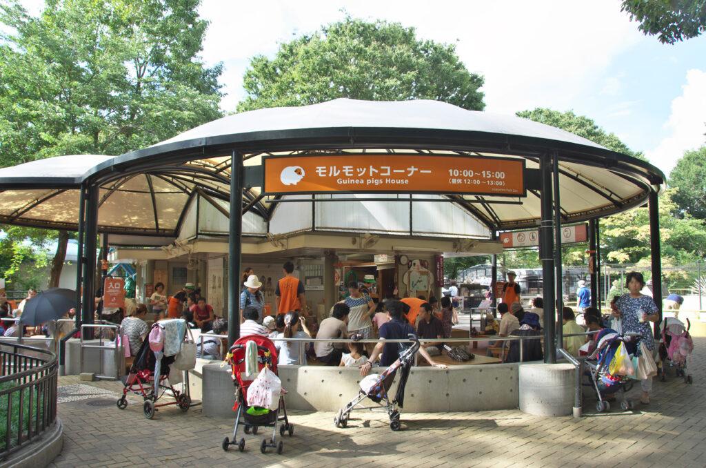吉祥寺 井の頭自然文化園 モルモットを抱き上げられます