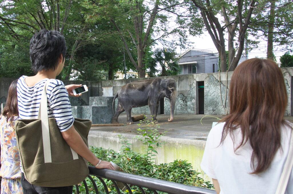 吉祥寺 井の頭自然文化園 過去の象のはな子さん