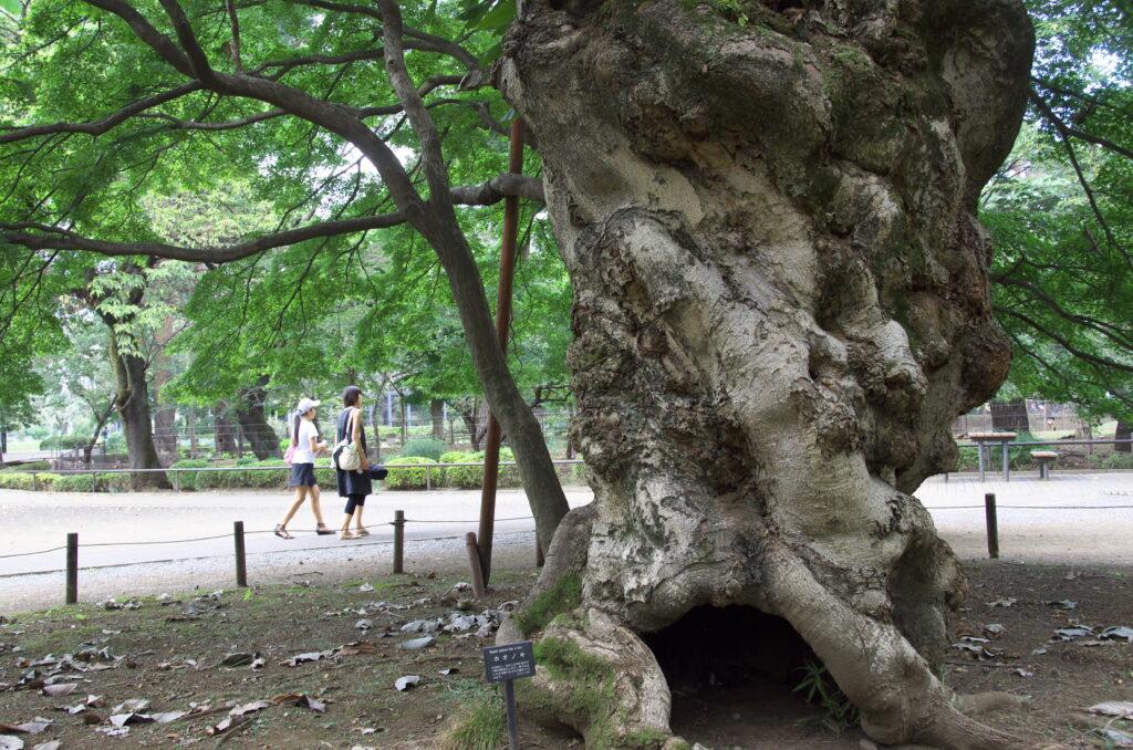吉祥寺 井の頭自然文化園