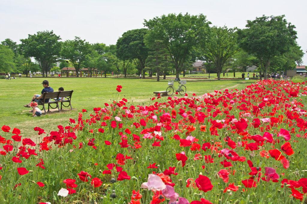 武蔵野市 武蔵野中央公園