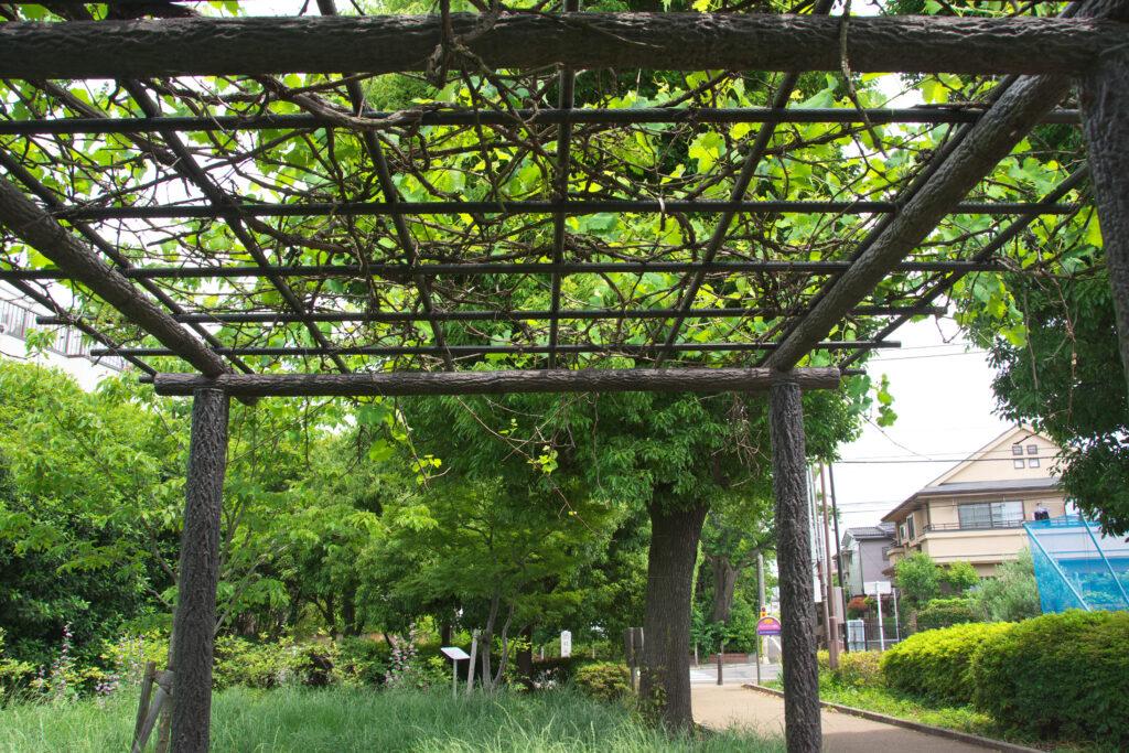 武蔵野市 グリンパーク遊歩道