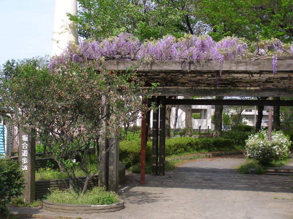 三鷹 堀合遊歩道 季節ごとの花も楽しめ、散歩コースに最適