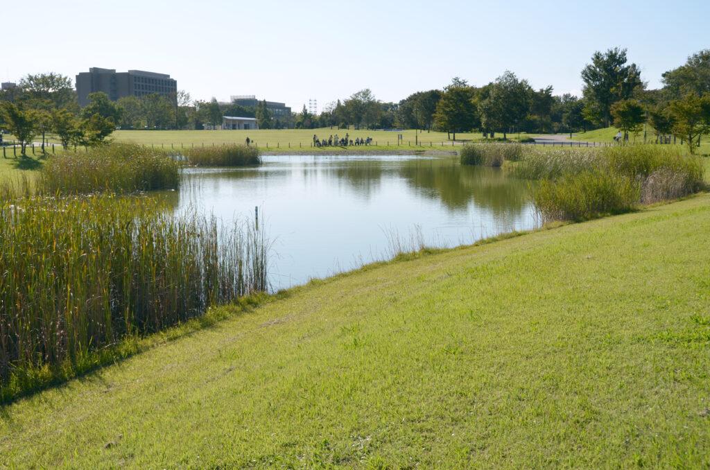 三鷹 武蔵野の森公園 水草が自然を感じさせる修景池