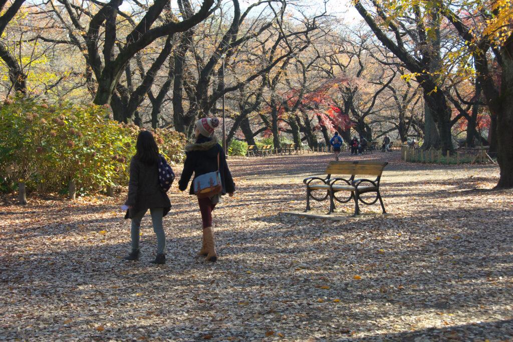 井の頭公園の秋 思い出ベンチ