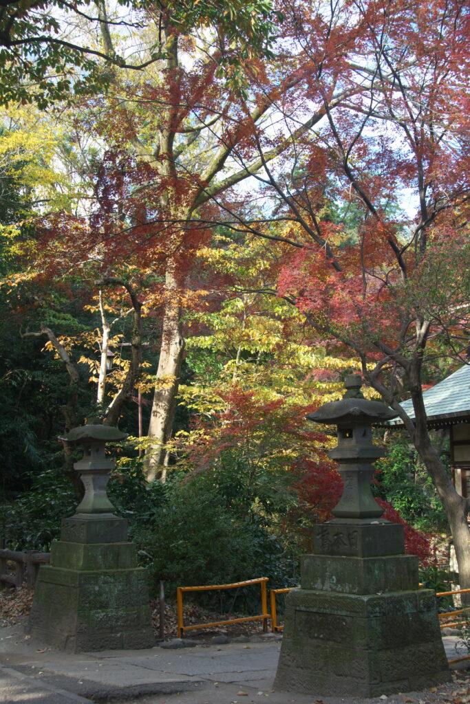 井の頭公園の秋