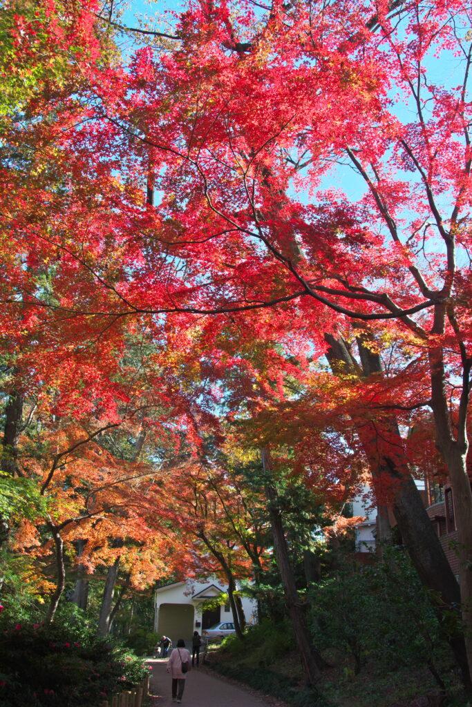 井の頭公園の秋 紅葉