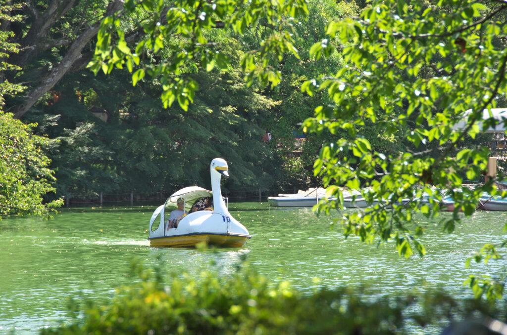 井の頭公園 スワンのボート