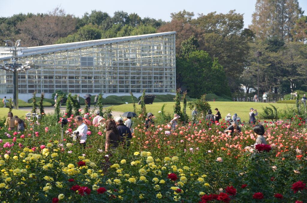 調布 神代植物公園・バラ園 バラ園越しに大温室を見たところ