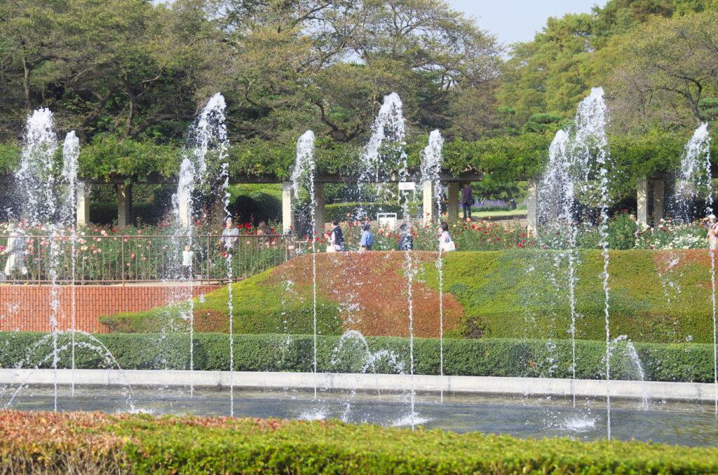 調布 神代植物公園・バラ園 バラ園をバックに高く吹き上がる噴水