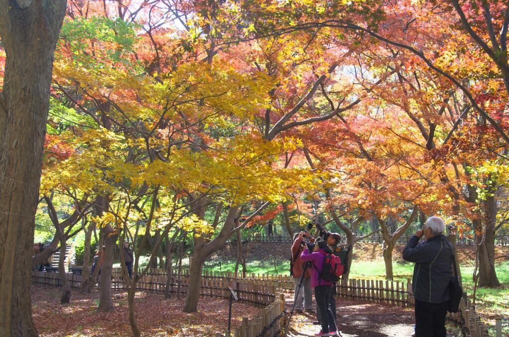 調布 神代植物公園・バラ園