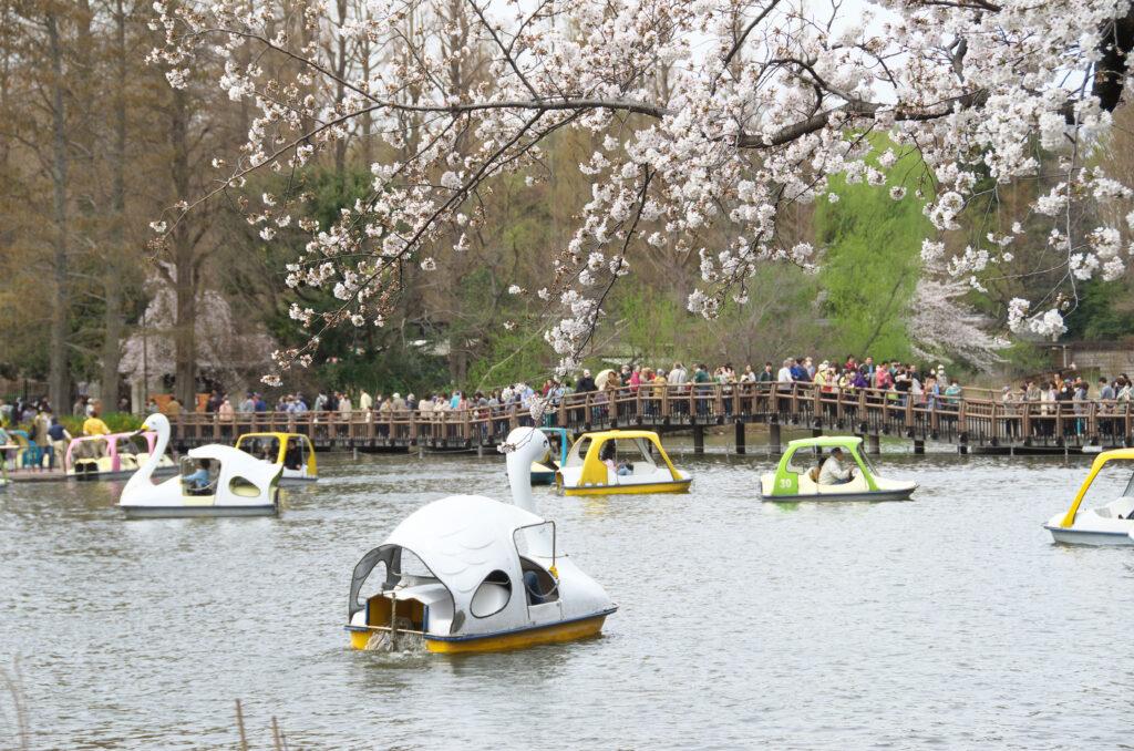 井の頭公園  桜とスワンボート