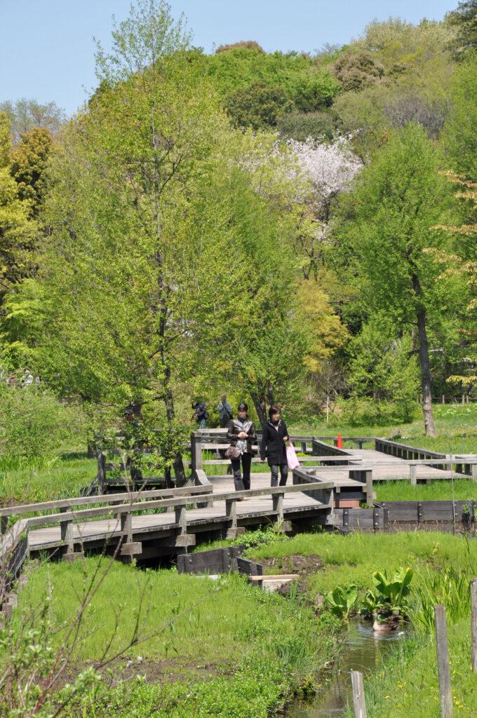 調布 神代水生植物園