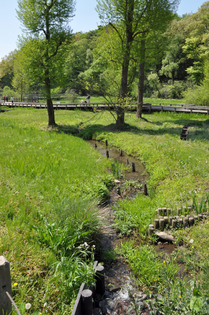 調布 神代水生植物園 綺麗な水が流れる園内の水路