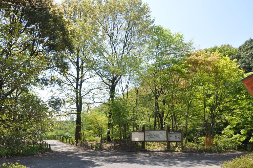 調布 神代水生植物園 水生植物園の入口を入った広場