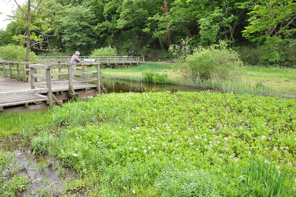 調布 神代水生植物園 右手の森は深大寺城跡です
