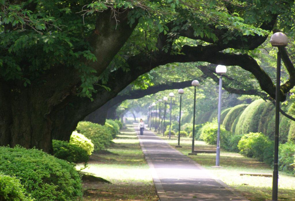 三鷹 ICU 湯浅八郎記念館 構内の小径